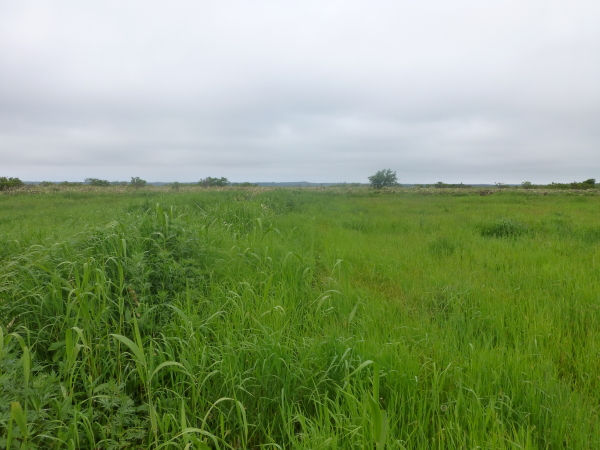 120618ペンケトーをめざし牧草地を突き進む