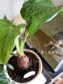 マメオのブログ-rps20120829_151916.jpg
