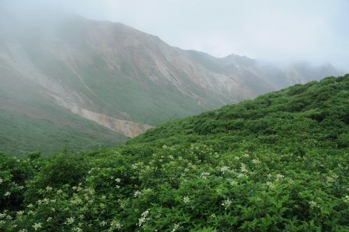 天狗ケ城・中岳 (8)