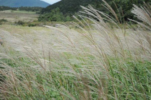 タデ原湿原 (5)
