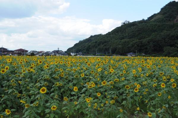 ひまわり園 (4)
