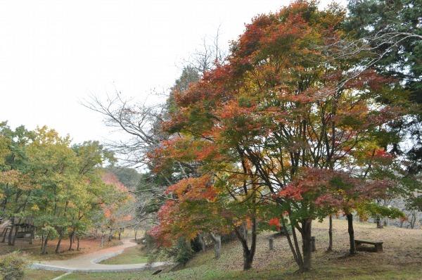 萩尾公園 (11)