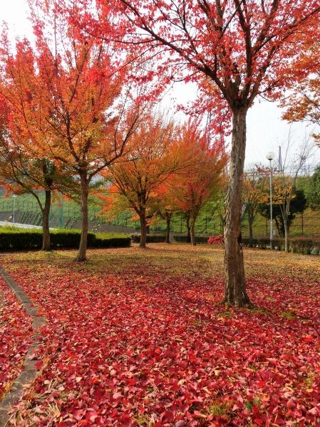 落葉のじゅうたん (2)
