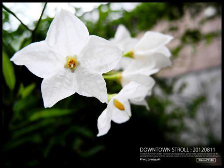 DSCN0010_20120811173615.jpg