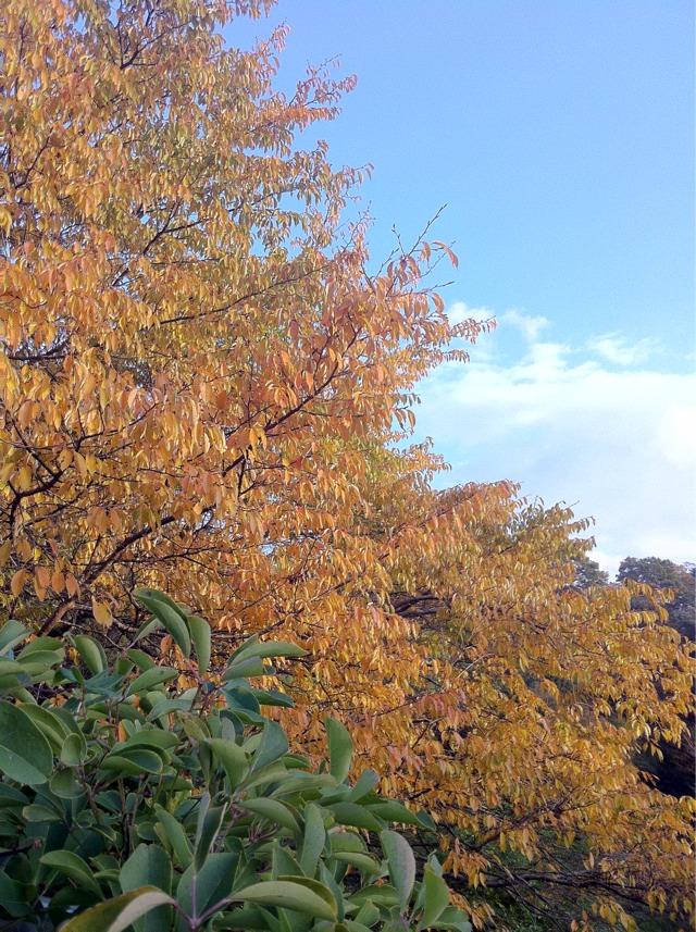 fc2blog_2012111017054440e.jpg