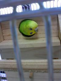 キキの籠に巣箱が入りましたよ