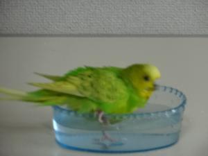 キキの水浴び♪