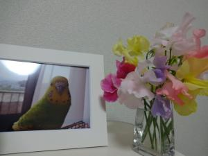 キキにお花を