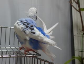 空の羽繕い