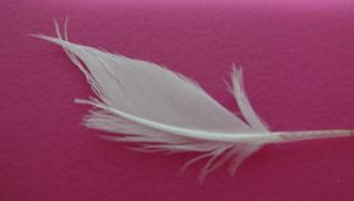 先の折られた翼