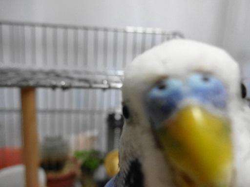 カメラに噛みついてきた