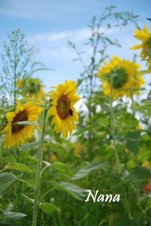 flower17-5.jpg