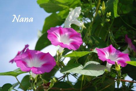 flower17-6.jpg
