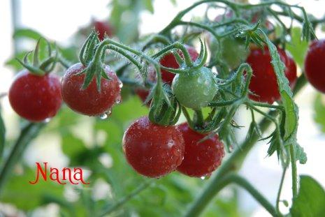 tomato17-3.jpg