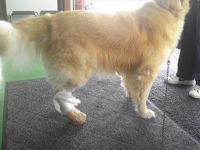 ラックの足
