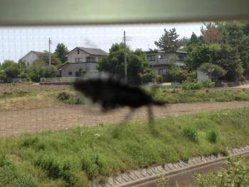 虫1_convert_20120518041822