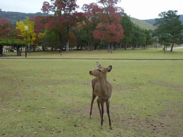 ことし生れの鹿