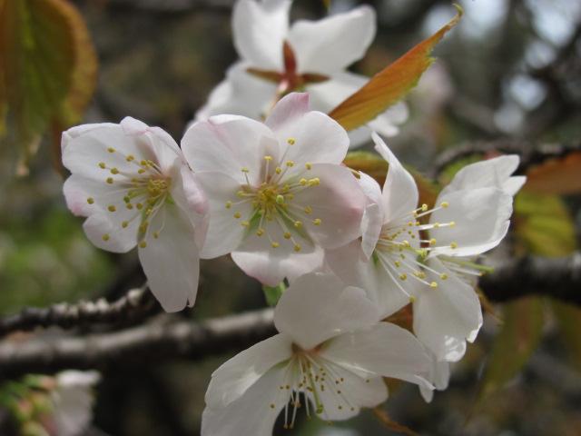 250414奈良公園 003