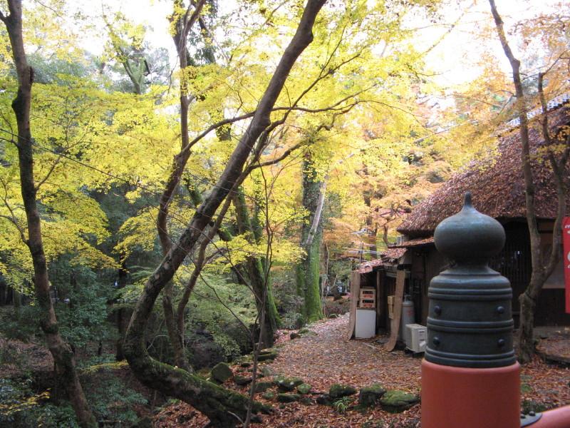 水谷茶屋黄葉