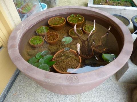 ADA睡蓮鉢