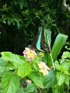 fc2blog_20120703102328974.jpg