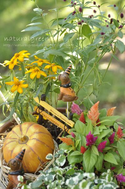 秋の寄せ植え~ハロウィン~