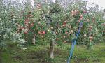 りんご音楽祭3