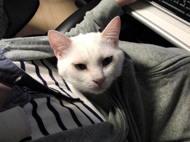 パーカー白猫