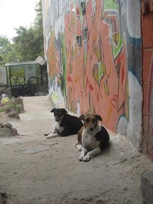 hkv-dogs.jpg