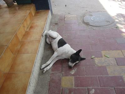meherchand-dog1.jpg