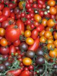 トマトの宝石