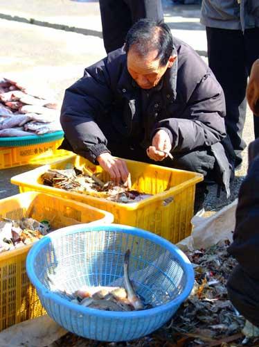 韓国 汚水海洋投棄6 魚よりゴミ分けて