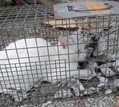 末森保護の白猫