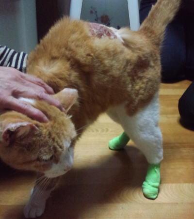 世田谷被害猫