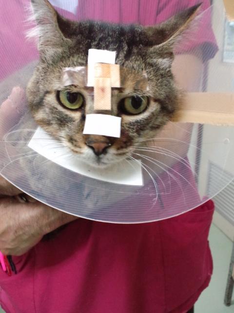 c171腫瘍摘出手術