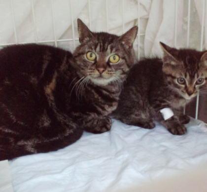 6月川房保護の子猫とママ猫