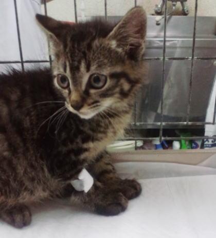 6月川房保護の子猫