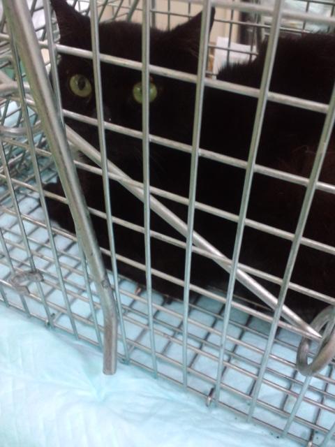 川房の黒猫