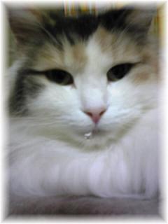 猫でもヨダレ?