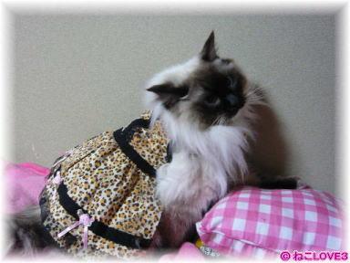 モモちゃん ドレス姿1