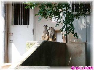 浜松市動物園にて