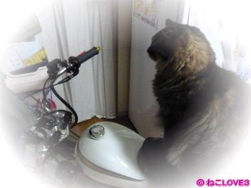 チビ バイクに1
