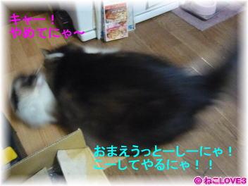 チビ&モモ3