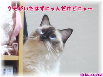 モモちゃん2