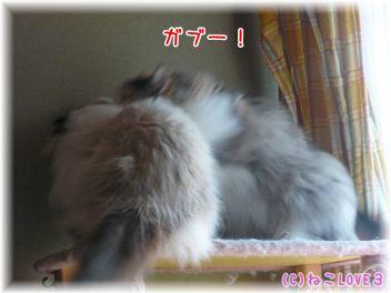 めいVSモモ3