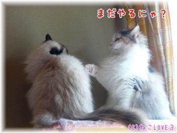 めいVSモモ4