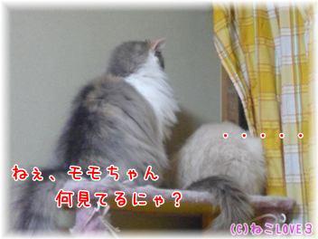 めい&モモ1