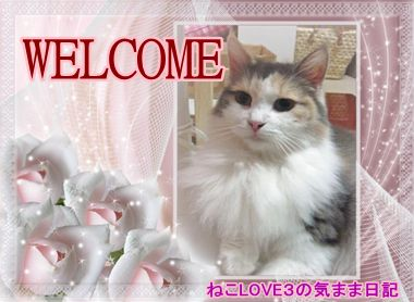 WELCOME めい