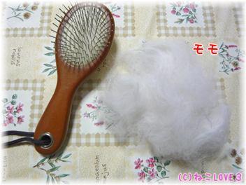モモの抜け毛