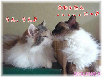 めい&モモ3